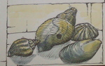 sketch of shells from guest book